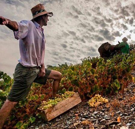 Mountain wine